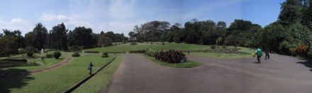 Kebun Raya Bogor. Gambar diambil di sini.